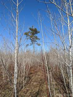 Lots And Land for sale in TBD 2 Off Little Bull Rd, Crystal Falls, MI, 49920
