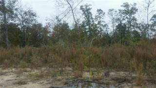 Farm And Agriculture for sale in tbd County Road 475, Kirbyville, TX, 75956