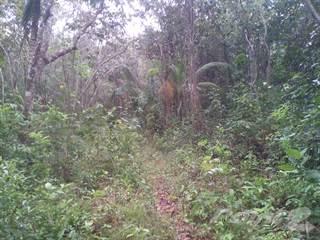 Farm And Agriculture for sale in 20 Acres farm land Santana, Belize District, Maskall Area, Belize