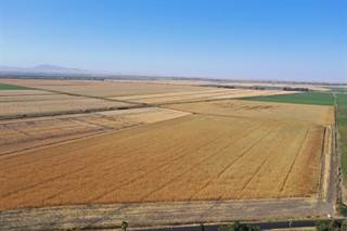 Farm And Agriculture for sale in 0 Terminous Road, Isleton, CA, 95641