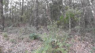 Land for sale in 00 TENNESSEE Street, Alford, FL, 32420