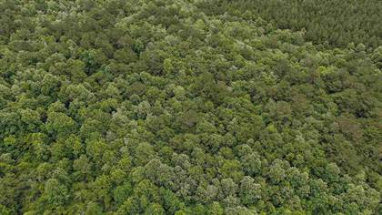 Lots And Land for sale in SCR 77, Mize, MS, 39116