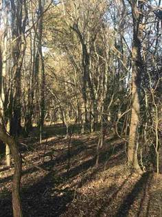 Lots And Land for sale in 000 SANDY BAYOU RD, Rolling Fork, MS, 39159