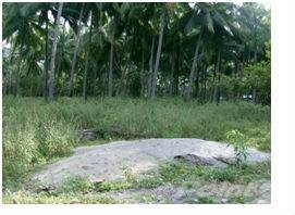 Residential Property for sale in Puerto Princesa City, Palawan, Puerto Princesa City, Palawan
