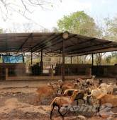 Residential Property for sale in Valladolid Rancho X-Chiceh 74 Acres Ranch with Cenote, Valladolid, Yucatan
