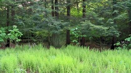 Lots And Land for sale in 14 Dyani Drive, Eagles Mere, PA, 17731