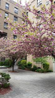 Apartment for rent in Enimon Realty Corp., Queens, NY, 11354