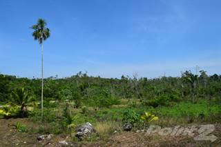 Farm And Agriculture for sale in 51 acre farm fertile land with fruit trees, Belmopan, Cayo