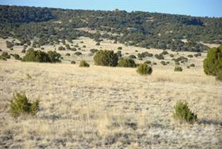 Land for sale in Lot 141, Quail Road, Red Hill, NM, 87829