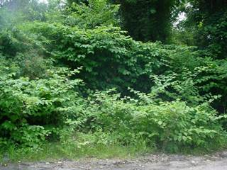Land for sale in 0 Sterling Avenue, Warwick, RI, 02889