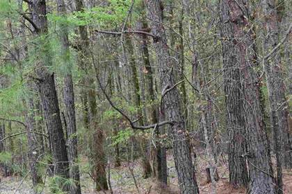 Lots And Land for sale in No address available, Taylor, AR, 71861