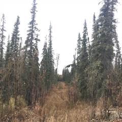 Land for rent in NHN VANWOOD TRAIL, Fairbanks, AK, 99709