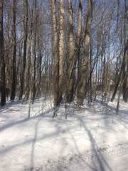 Land for sale in 11074 Bach Drive, Byron, MI, 48418