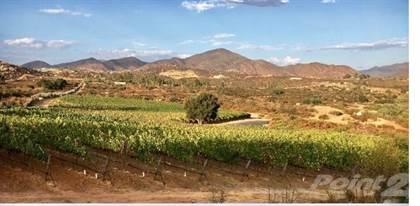 Other Real Estate for sale in Valle de Guadalupe, vineyard Vivasol, Ensenada, Baja California