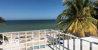 Chicxulub Puerto Real Estate - Homes for Sale in Chicxulub
