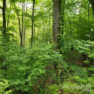 Lots And Land for sale in TBD Pack Saddle Drive, Burnsville, NC, 28714