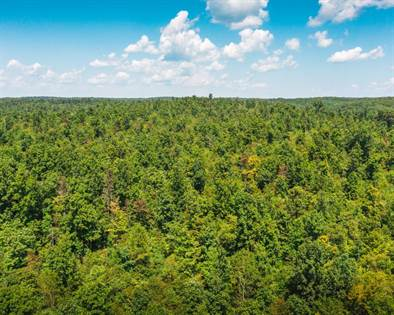 Lots And Land for sale in TBD Wayne County 220B, Silva, MO, 63964