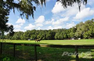 Farm And Agriculture for sale in 11180 N. Rock Ave, Dunnellon, FL, 34433