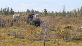 Farm And Agriculture for sale in On Range Road 60, Rural Clearwater County, Alberta