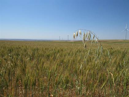 Farm And Agriculture for sale in Nhn Hallenberg Road, Shelby, MT, 59474