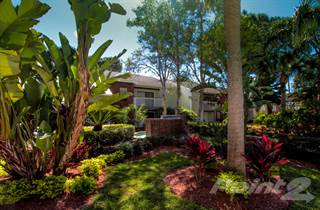 Apartment for rent in The Park at Elland - Beechnut, Clearwater, FL, 33765