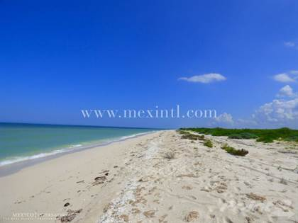 For Sale: Stunning Flamingo Beach Lots Owner Financing!, Chuburna, Yucatan  - More on POINT2HOMES com
