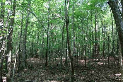 Lots And Land for sale in OLD JACKSON RD, Conehatta, MS, 39057