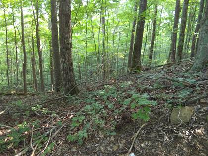 Lots And Land for sale in Buffalo Rd, Oneida, TN, 37841