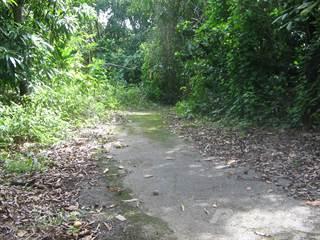 Land for sale in Finca 2.84 cuerdas, Bo. Miradero Mayagüez, Mayaguez, PR, 00682