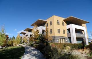 Apartment for rent in Equinox Apartments - One Bedroom, Missoula, MT, 59808