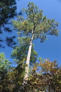 Lots And Land for sale in 1-1-38 Texas Grand Road, Huntsville, TX, 77340