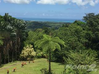 Residential Property for sale in El Yunque - House FOR SALE, Rio Grande, PR, 00745