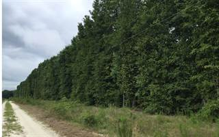 Land for sale in 203RD PLACE, Live Oak, FL, 32060