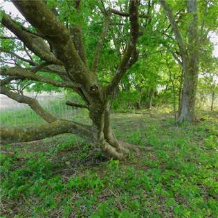 Farm And Agriculture for sale in Lot 13 - 16 County Road 417, Thorndale, TX, 76577