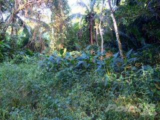 Farm And Agriculture for sale in 30 acres along Mussel Creek, Belize River Valley, Burrel Boom, Belize