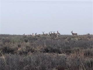 Lots And Land for sale in 625.5 Acres FM 206, Morton, TX, 79346