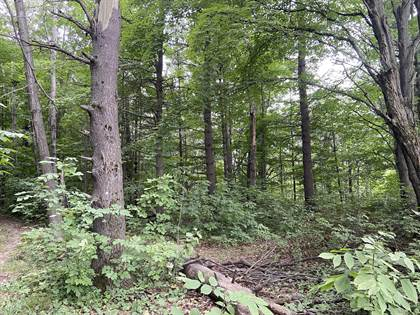 Lots And Land for sale in 4+ acres Taylor, Mears, MI, 49436