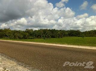Farm And Agriculture for sale in 25 miles Northen hwy Biscayne Village, Sand Hill, Belize