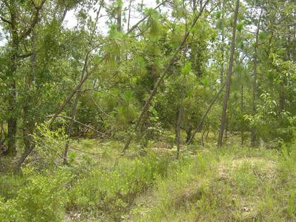 Lots And Land for sale in 00 Olivia, Alford, FL, 32420
