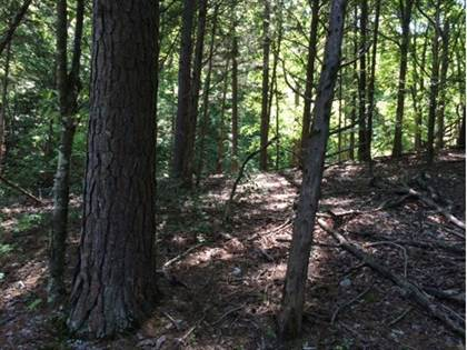 Lots And Land for sale in 1620 Pinecrest  LN, Hobbs State Park, AR, 72756