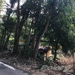 Land for sale in BARRIO NEGROS- COROZAL, Corozal, PR, 00783