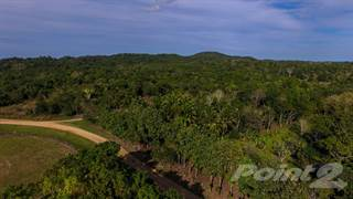 Farm And Agriculture for sale in Unitedville, Cayo, Belize