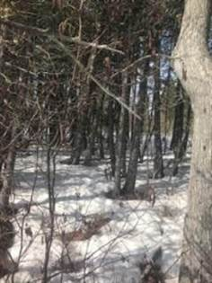 Lots And Land for sale in N. GOULD CITY RD., Gould City, MI, 49838