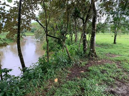 Farm And Ranch for sale in Cattle farm with River San Carlos # 1, San Carlos, Alajuela
