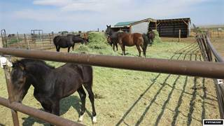 Farm And Agriculture for sale in 350 E Pavillion, Pavillion, WY, 82523