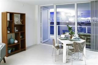 Apartment For Rent In Southgate Towers Luxury Rentals   The Chinese Fan  Palm, Miami Beach