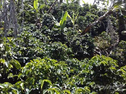 Farm And Agriculture for sale in Coffee & Avocado Farm in La Providencia de Dota with 360 Degrees of Mountain View, San José