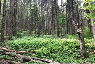 Land for sale in ANGELL HILL, Austerlitz, NY, 12037