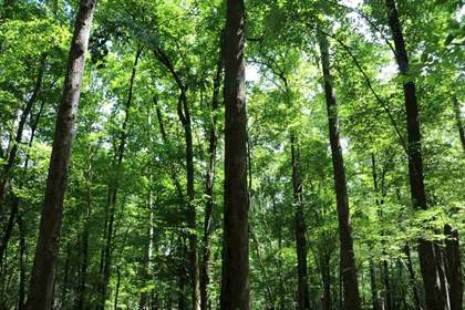 Lots And Land for sale in ATTALA COUNTY RD 4201, Durant, MS, 39192