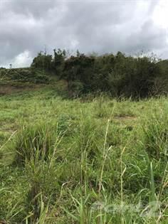 Farm And Agriculture for sale in BUENA VISTA WARD HATILLO PR, Hatillo, PR, 00659
